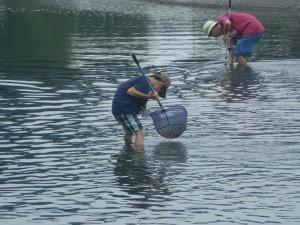 魚の採集2015