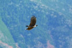 業務内容のご紹介 目次【動植物、生態系】 猛禽