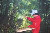ビーティングによる昆虫の採取