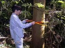 毎木調査状況