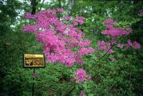 ネイチャートレイルの樹木板