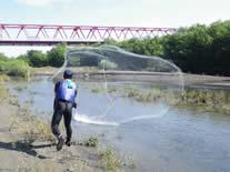 投網による魚類捕獲