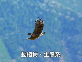 植物、動物、生態系、猛禽類