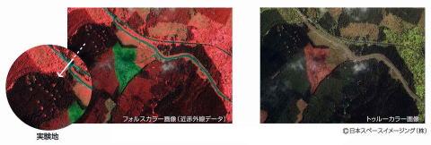 IKONOS衛星画像による富士山自然林復元実験地の植生解析